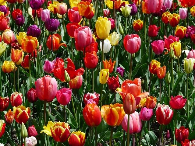 Große Vielfalt für Ihre Blumensträuße in der Blumenboutique Melanie in Mittweida