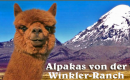 AWR Alpakas von der Winkler-Ranch