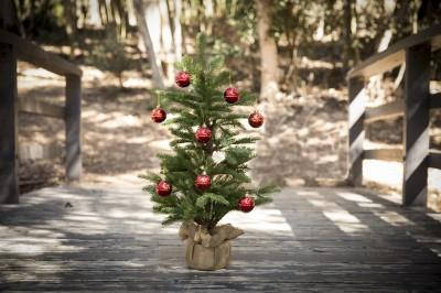 Tschüss, Weihnachtsbaum